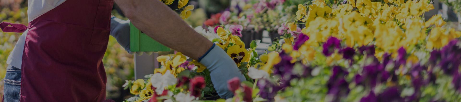 osoba dbająca o kwiaty