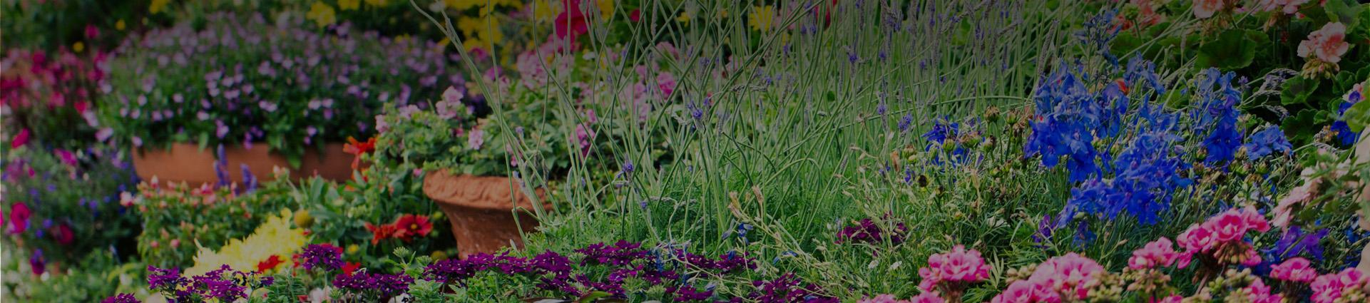 różnorodne kwiaty rosnące w ogrodzie